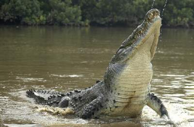 Crocodile & Bird Watching Tour